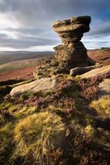 Salt cellar, heather and grasses, Derwent Edge