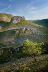 Peter Stone and hawthorn, Cressbrook Dale