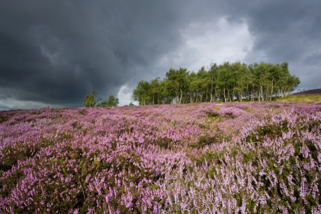 Heather moorland, just before the rain, Longshaw Estate
