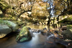 Padley Gorge, Longshaw Estate