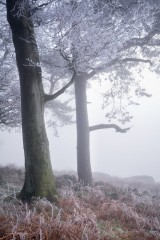 Stanage Plantation, freezing fog