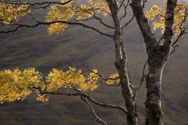 Birch tree next to Loch a Chroisg