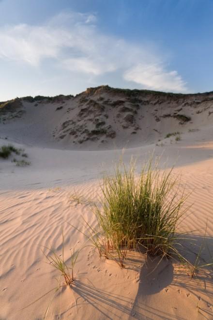 Dunes and bird tracks, Freshwater West