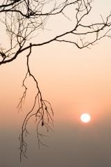 Silver birch, Ramsley Moor