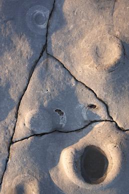 Ammonites in limestone, Lyme Regis