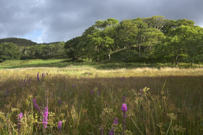 Oak Woods and wet meadow, Mull