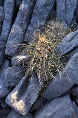Limestone pavement a, Thwaite Scar