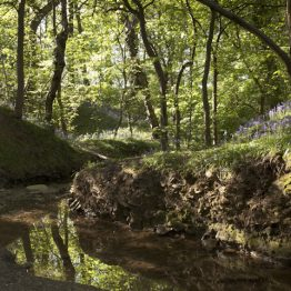 Bluebell and coppice wood by The Moss brook, moss valley nature reserve